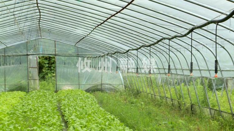 【记者在扶贫一线】蔬菜大棚用上新技术,既节能又省力