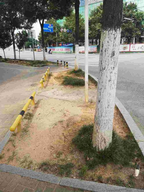 草皮破损。