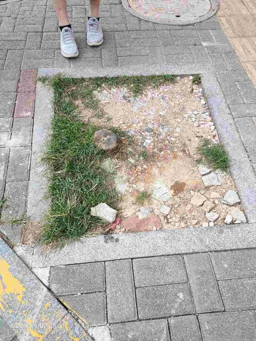 谭家垄路绿化损坏